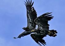 EagleBrothers