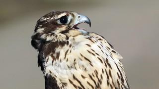 Falcon-Prairie-2015-01-06-178a