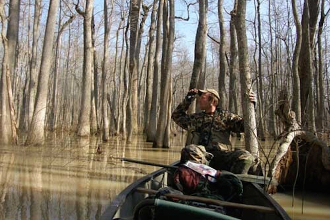 A searcher in Arkansas in 2007-08. Photo by Richard Guthrie, courtesy of the Cornell Lab of Ornithology.