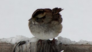 ss-in-blizzard2