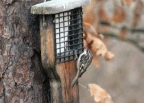 25-Posing-on-the-feeder-2-14-15