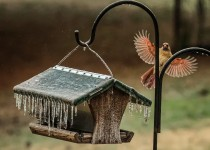 Bird12513-210-Edit-crop-3-R1