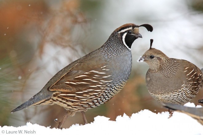 winter birds: 10 photos show birds making do with all that ... meyer st90 snow plow wiring diagram for snow quail diagram