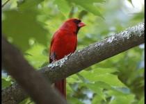 Cardinal-in-tree
