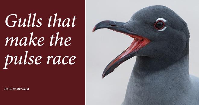 Gulls-rotator