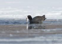 Portage_Lakes150206-8050-Edit