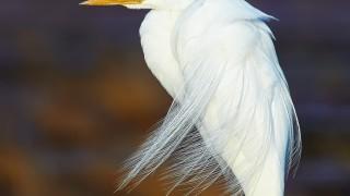 bird-8-1