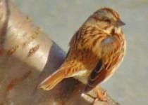 birdie8.jpg
