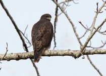 watermarked-Bird-Sanctuary-037-Copy-2