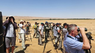 Birders scan for birds in Yotvata, Israel, during the 2014 Champions of the Flyway race. Photo by Marc Guyt