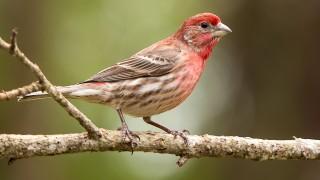 Bird-2014-2787