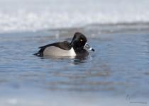 Portage_Lake150215-8483-Edit