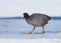 Portage_Lakes150228-8717-Edit