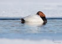 Portage_Lakes150228-8851-Edit