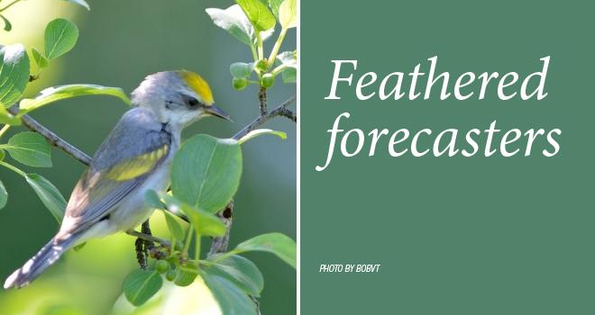 forecasters-rotator