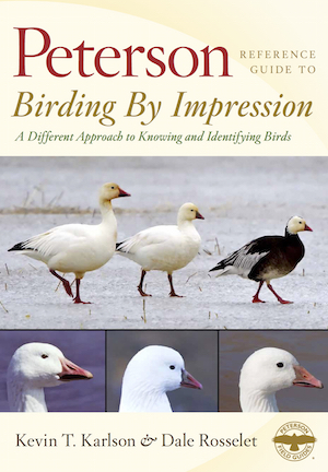 Birding by Impression_300x432