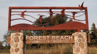 Entrance to Forest Beach Migratory Preserve. Photo courtesy of sculptor Don Rambadt.