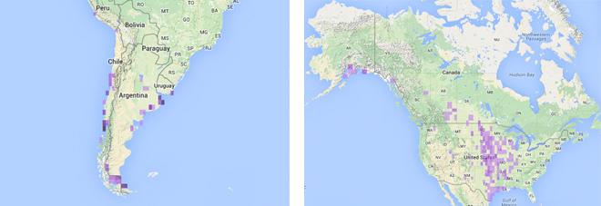 Hudsonian-Godwit-maps