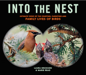Into the Nest_300x262