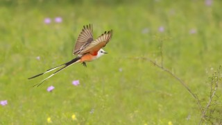 SCFC-takes-flight