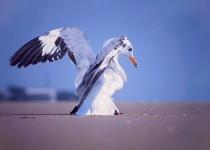 bird-copy